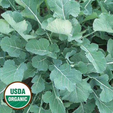 Smooth German Kale Vegetable Seeds AS2147