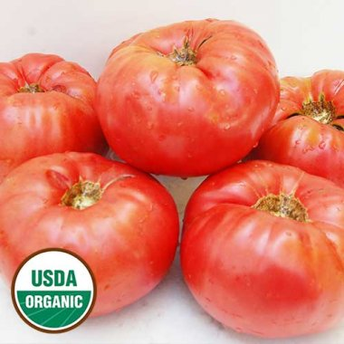 Whittemore Heirloom Tomato Vegetable Seeds AS2571