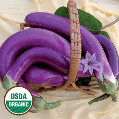 Pingtung Long Eggplant Vegetable Seeds AS2114