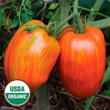 Speckled Roman Tomato Vegetable Seeds AS2560