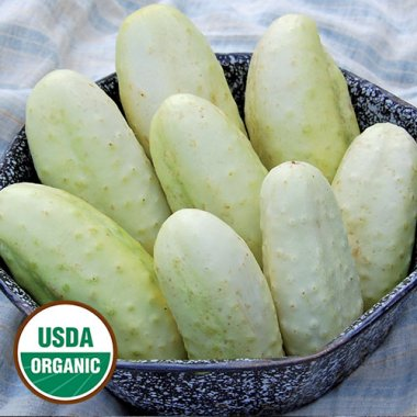 Edmonson Cucumber Vegetable Seeds AS2092