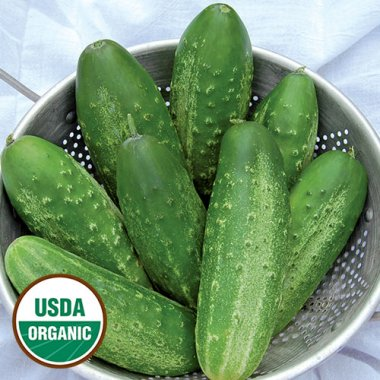 Russian Pickling Cucumber Vegetable Seeds AS2103