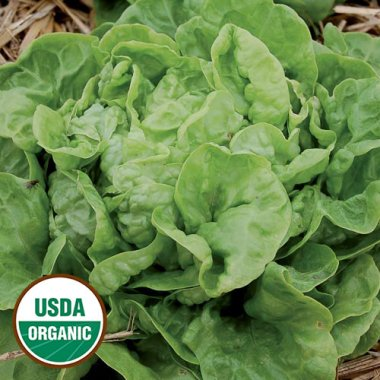 Three Heart Lettuce Vegetable Seeds AS2467